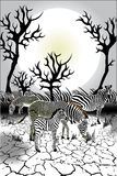 Animals - Wildlife - Zebra Stock Images