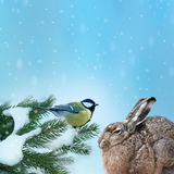 Animals in winter time stock photography