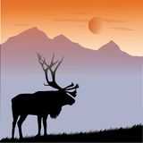 Animals word elk Royalty Free Stock Images