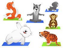 Animals yoga Stock Images
