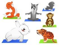 Animals yoga. A set of animals yoga on a white background Stock Images