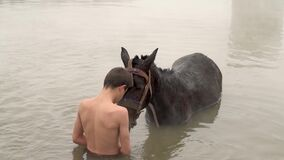 Animals and young boys in thermal water, friendship of boys with domestic animals, Guroymak, Bitlis