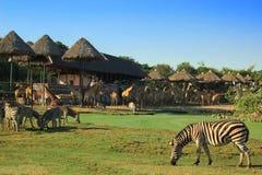 Animals in zoo. Zebra and giraffe in open zoo Stock Photo