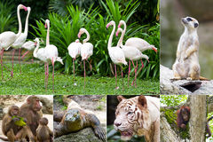 Animals in the Zoo. Animals in the Singapore Zoo Royalty Free Stock Photo