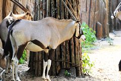 Animals zoo, Vietnam Stock Images