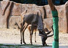 Animals zoo, Vietnam Royalty Free Stock Photos