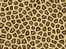 Animalskin print_3 Stock Photo