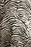 Animated background of zebra. Textile Stock Image