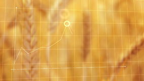 Animated Chart For Wheat Yield in Agricultural cultivated field stock video footage