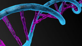 Animated DNA chain. Rotation DNA stock video footage
