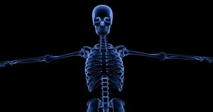 An animated X Ray of a dancing human skeleton, rotating 360 degrees back and forth stock video footage