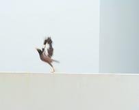 Animatie van een vogel het vliegen macht omhoog Royalty-vrije Stock Foto's