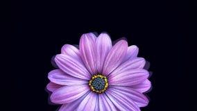 Animatie van het bewegen van bloemknop Grote knop van mooie realistische bloemvlotters op zwarte achtergrond die op water lijken royalty-vrije stock foto