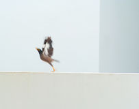 Animation of a bird flying power up. From the wall Royalty Free Stock Photos