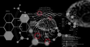 Animation of data processing, human brains and dna strand spinning over biometric fingerprint