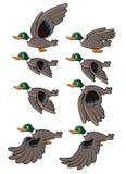 Animation de vol d'oiseau Images libres de droits