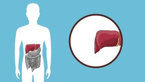 Animation du concept d'appareil digestif HD illustration stock