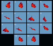 Animation of flaing butterfly Royalty Free Stock Photography