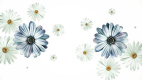Animation flying of realistic flowers buds on black background. Seamless animation of colorful flower motion graphic. With flower background pattern texture stock photo