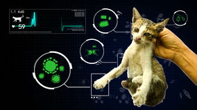 Animation of germ pathogen analysis from animal and pet cat gifographic background for health or biology education. Hand holding a stock footage