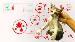 Animation of germ pathogen analysis from animal and pet cat gifographic in white background for health or biology education stock footage