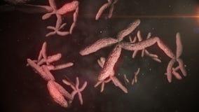 Animation of moving chromosomes stock illustration