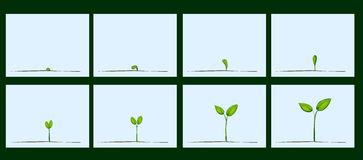 Animation of seed germination on soil Royalty Free Stock Image