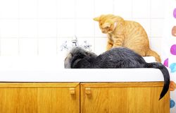 Animaux à la maison chien et chat jouant ensemble dans la salle de bains Image libre de droits