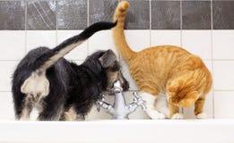 Animaux à la maison chien et chat jouant ensemble dans la salle de bains Photo stock