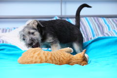Animaux à la maison chien et chat jouant ensemble sur le lit Image libre de droits