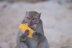 animaux Photo libre de droits