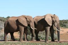 Animaux africains Photo stock