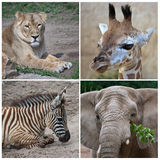 Animaux africains Image libre de droits