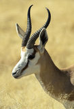 Animaux africains 8 photographie stock