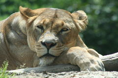 animaux africains Photos stock