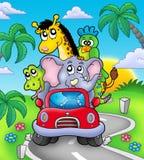Animaux africains dans le véhicule sur la route Photos stock