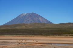 Animaux avant le volcan brumeux au Pérou Photographie stock