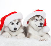 animaux Blanc enroué de deux chiots, chapeau de Noël ! Photo libre de droits