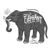 Animaux d'éléphant avec le texte témoin Photographie stock