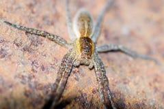 Animaux d'animaux familiers d'araignée photographie stock