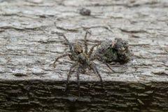 Animaux d'animaux familiers d'araignée image stock