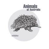 Animaux d'Australie Echidna illustration stock