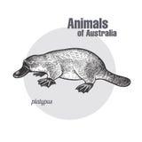 Animaux d'Australie Ornithorynque ou ornithorynque illustration de vecteur