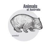 Animaux d'Australie wombat illustration libre de droits