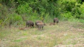 animaux dans la nature sauvage clips vidéos