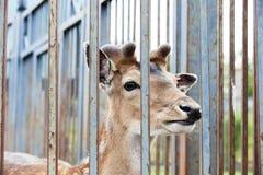 Animaux dans le zoo Photographie stock libre de droits