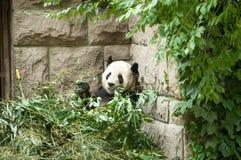 Animaux dans le zoo dans Pékin photographie stock libre de droits