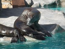 Animaux, dans leur endroit marin images stock