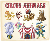 Animaux de cirque Photo stock