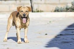 animaux de compagnie, chiens Photographie stock libre de droits